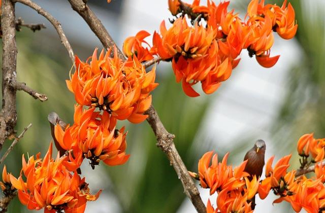 ঋতুসংগীত-বসন্ত (Seasonal Music: Spring)